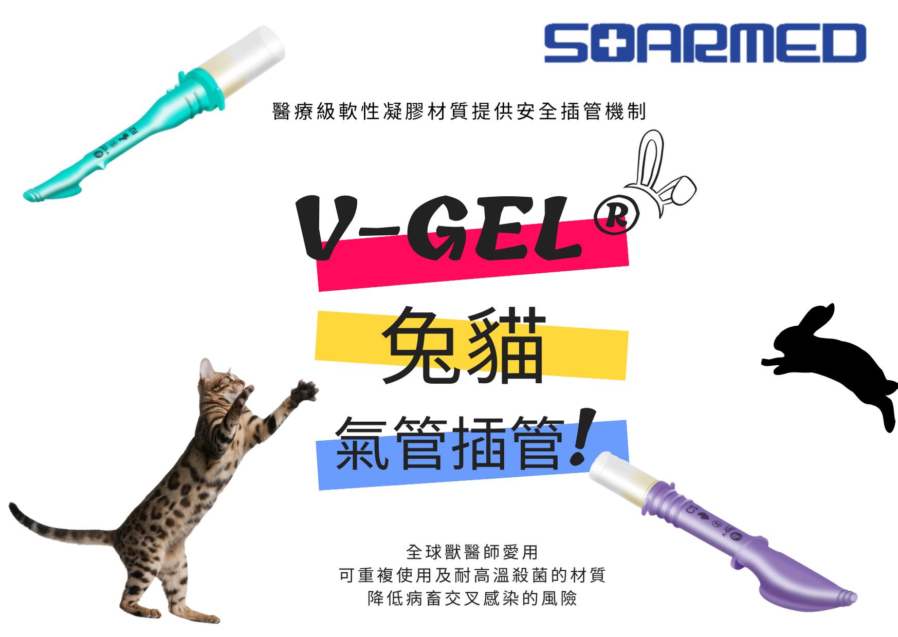 v-gel 兔貓 氣管插管! (3)